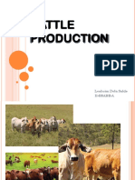 Cattle Production