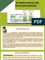 13. Plantas Acuaticas -Expo