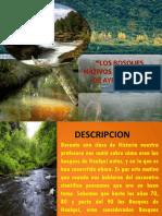 Los Bosques Nativos de Hualqui1