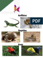 Clasificacion de Animales