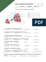 Evaluacion Sistema Circulatorio 5to