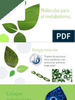 Moleculas para el metabolismo. BIOLOGIA IB NM