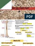 Histologia Osea
