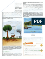 ciclos biogeoquimicos leccion