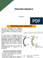 10._RESPIRACION_ANOXICA.2
