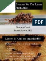 Ant Presentation- Responsibility Lesson
