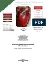 Anatomia comparada dos vertebrados