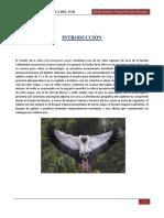 Condor de La Selva