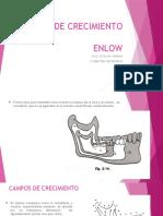 TEORIA DE CRECIMIENTO ENLOW.pptx