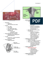 Maternal Physiology