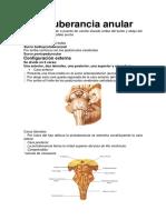 Protuberancia Anular y Sd Pontinos