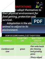 Animaladaptation 140710110824 Phpapp01 (1)