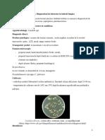 LP_13 Fungi