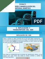 2. Replicación y Transcripción Del ADN (1)