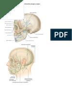 RESUMO TUTORIA 2 - Linfonodomegalia Cervical (Objetivos 5 e 6)
