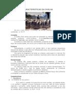 CARACTERISTICAS DA OVELHA.docx