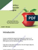 Apunte de taxonomía de micología