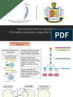 11.- Comunicación Intra e Intercelular