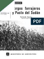 Hd_1966_24 Sorgos y Sudan Grass