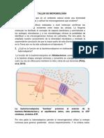 312299158-Taller-de-Microbiologia-Primer-Corte.docx