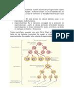 Gametogénesis con imagenes.docx
