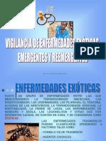 EXÓTICAS.ppt