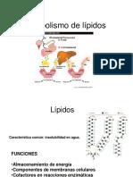 Metabolismo de Lipidos QF