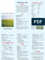 Variedad arroz pitipo