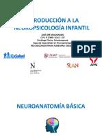 Introducción a la neuropsicología infantil