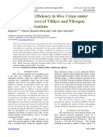 Radiation use Efficiency in Rice Crops under Different Numbers of Ttillers and Nitrogen Fertilizer Applications
