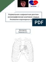 Анатомия коронарных артерий