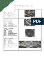 Deskripsi Fosil Foraminifera Besar Satuan Batugamping