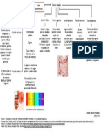 El tracto intestinal y digestivo