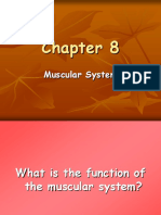 NS1 Muscular System