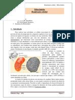 Respiração Celular.pdf