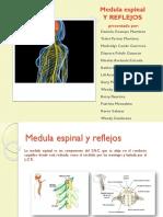 Medula y Reflejos