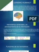 Diapositivas Del Cerebro Humano