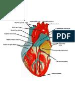 Parts Heart