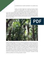 Resumen Del Mundo Del Misterio Verde
