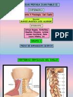 Anatomia y Fisiologia de Cuello