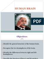 The Human Brain With Quiz