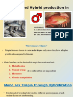 Monosex and Hybrid production in Tilapia
