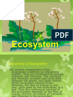 2 Dynamicsofecosystem 121129013419 Phpapp01