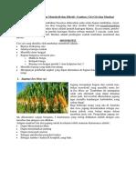 40 Contoh Tumbuhan Monokotil Dan Dikotil