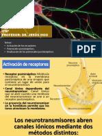 Activación de Receptores Neuro Prueba