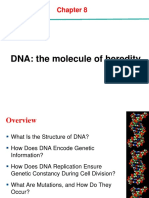 Chapter 8- DNA the Molecular of Inheritance