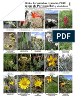 plantas parinacochas.pdf