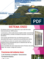 Sistema Oseo Ss