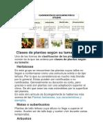 Clases de Plantas Según Su Tamaño