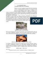 4.La Piedra Caliza